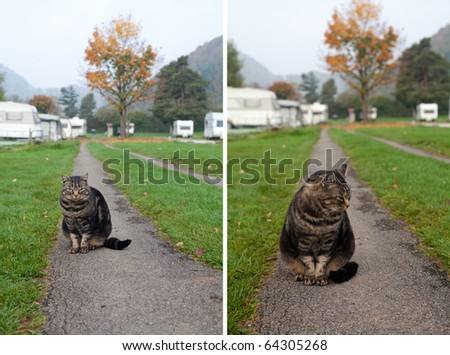 cat in camping place - stock photo