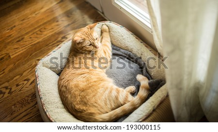 Cat in Cat Bed - stock photo