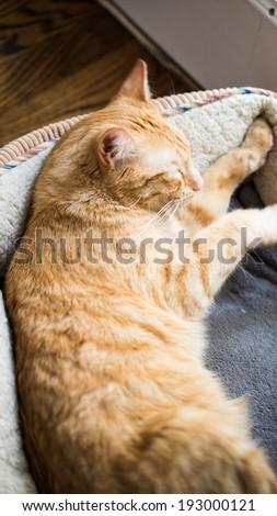 Cat in Cat Bed - stock photo