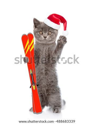 Cat in christmas hat holding skiing. isolated on white background
