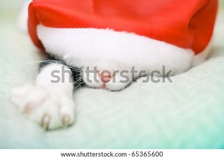cat in christmas the Santa's hat - stock photo