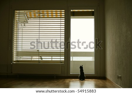cat in empty rood - stock photo