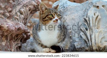 Cat in Ephesus, Cat, Cat Face, Cat Looking Away, Antique - stock photo