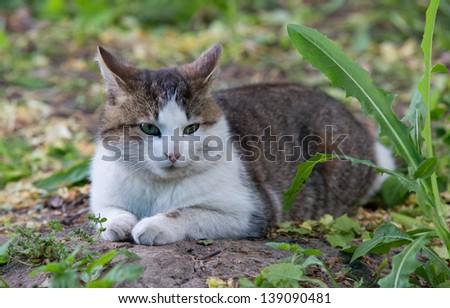Cat in garden - stock photo