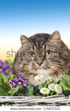 Cat in garden flowers