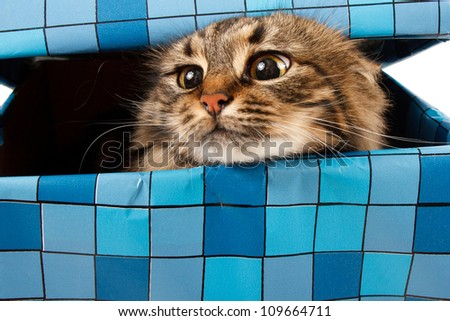 cat in gift box - stock photo