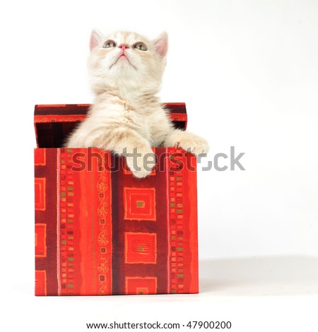 cat in gift box isolated on white background - stock photo