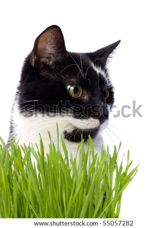 cat in grass isolated on white background - stock photo