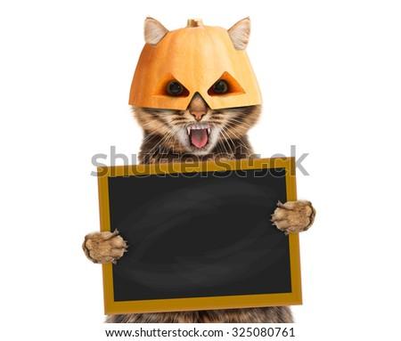 Cat in halloween mask with blackboard  - stock photo