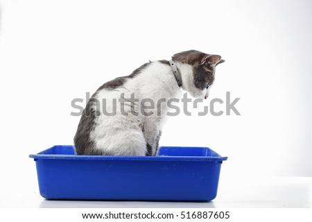Litter Stock Images Royalty Free Images Amp Vectors