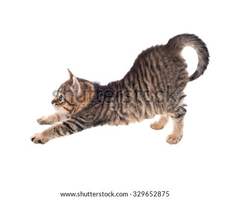 Cat in motion. isolated - stock photo
