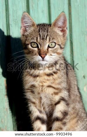 Cat in outdoor - stock photo
