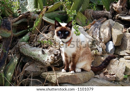 cat in outdoors