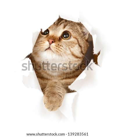 cat in paper hole - stock photo