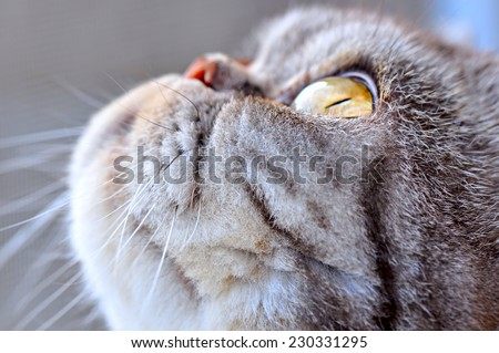 Cat in profile - stock photo