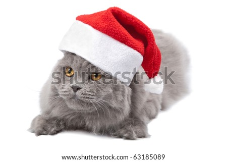 cat in red cap isolated