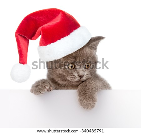 Cat in red christmas hat peeking from behind empty board. isolated on white background - stock photo
