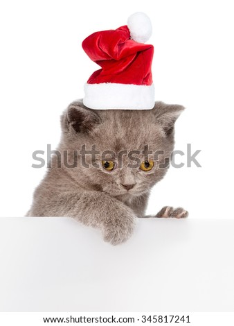 Cat in red christmas hat peeking from behind empty board. Space for text. isolated on white background - stock photo