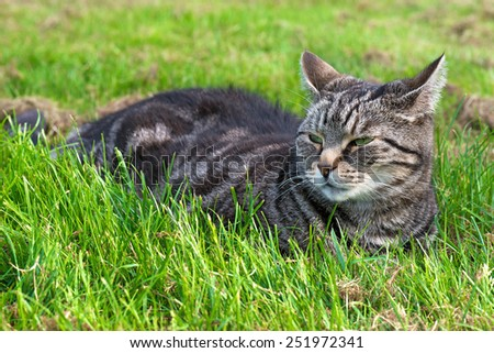 Cat in resting on grass - stock photo