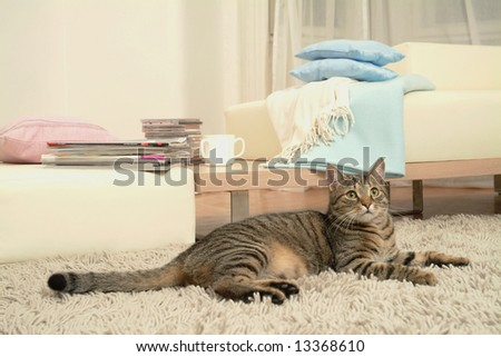 Cat in resting room - stock photo