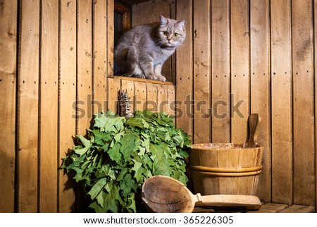 Cat in sauna interior. Accessories and interior of Finnish sauna - stock photo