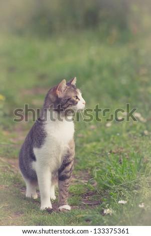 Cat in spring - stock photo