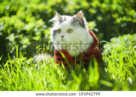 cat in spring grass