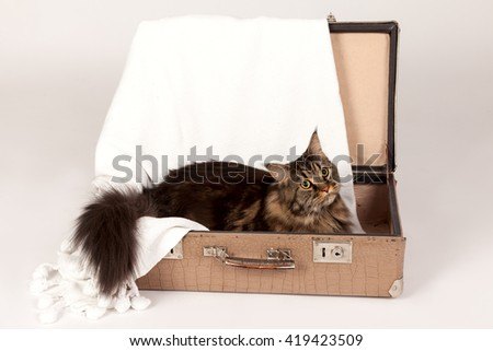cat in suitcases - stock photo