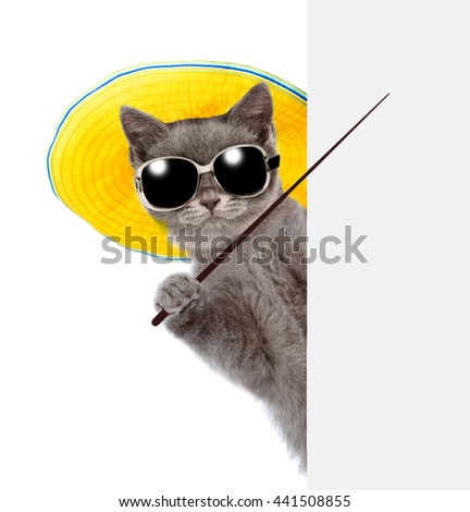 Cat in sunglasses and hat holding a pointing stick and points on empty banner. isolated on white background. - stock photo