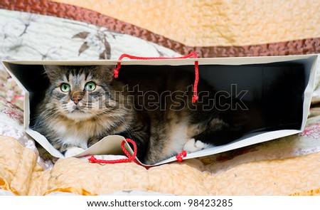Cat in the bag - stock photo