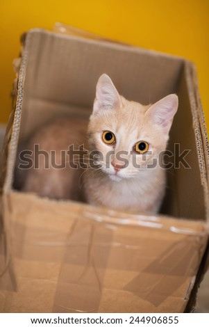Cat in the box - stock photo