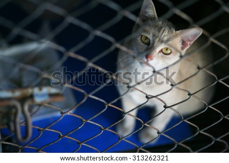 cat in the cage with sadness eye - stock photo