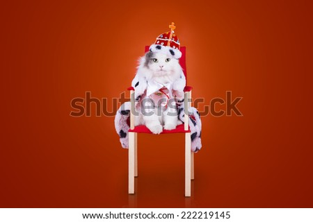 cat in the clothes of the king on a red background - stock photo