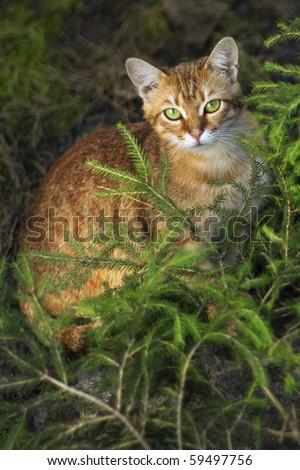 Cat in the dark - stock photo