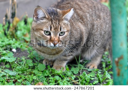 cat in the garden - stock photo