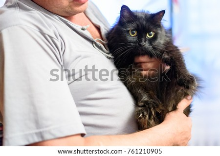 cat in the hands of man