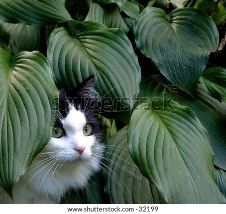cat in the leaves - stock photo