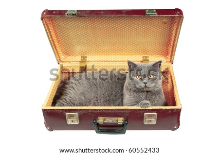 Cat in the old vintage suitcase. Isolated on white. - stock photo