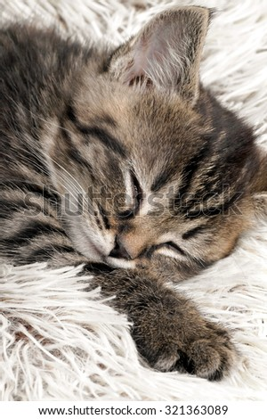 Cat in the rest. - stock photo
