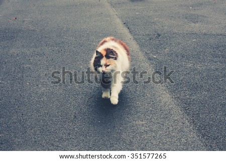 Cat in the street - stock photo