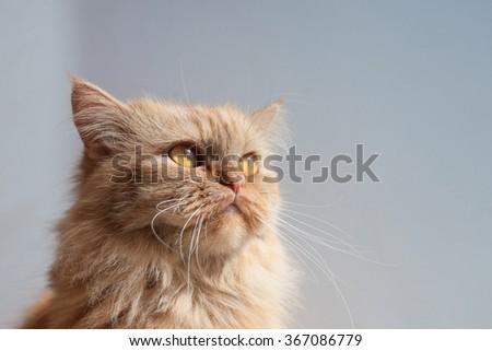 Cat in the sun - stock photo