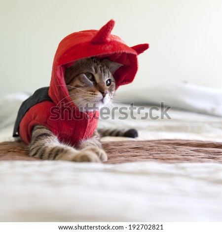 Cat in Uniform - stock photo