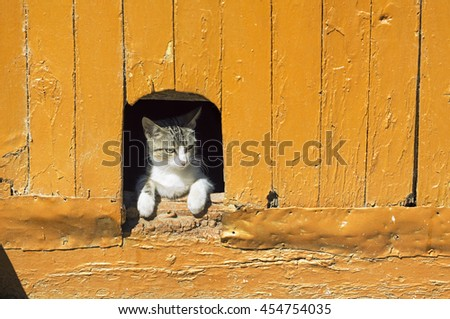 cat in vintage wooden door - stock photo