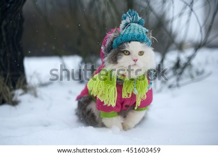 cat in winter clothes on a walk - stock photo