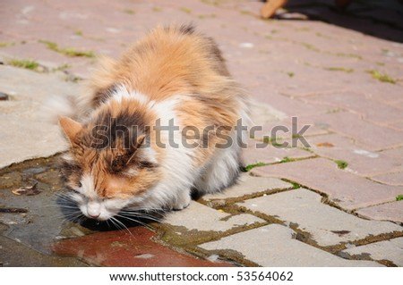 cat is drinking water - stock photo