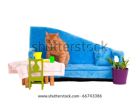 Cat is getting ready to have a meal - stock photo