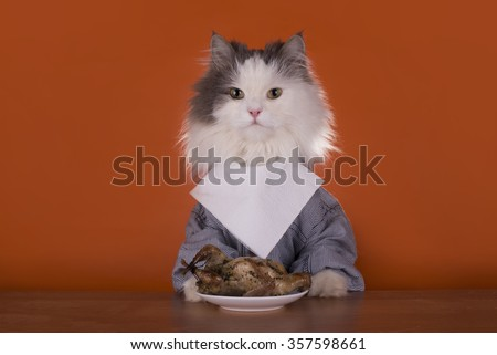 Cat is going for dinner with chicken - stock photo