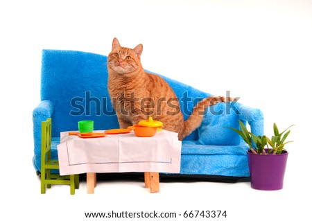 Cat is Going to Have a Dinner Sitting On Sofa - stock photo