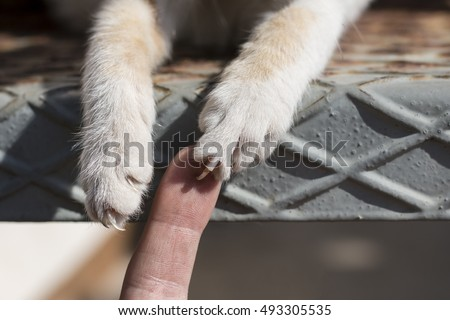Cat is grabbing human finger using claws (nails). Shot of paws and finger only.