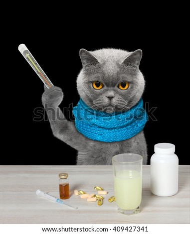 Cat is  ill and drinks the medication -- isolated on black background